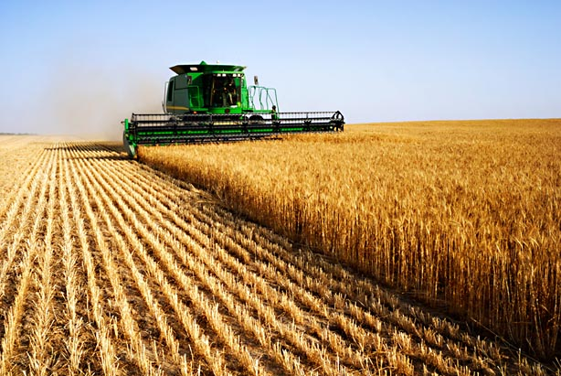 Balanced Scorecard for Agricultural Industry